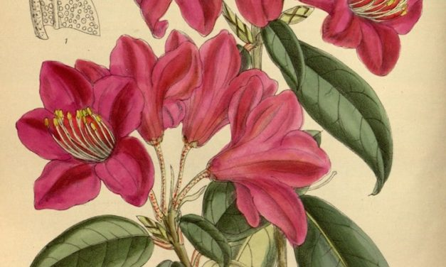 Biodiversity Heritage Library Puts 2 Million Botanical Illustrations Online for Free